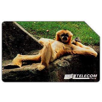 Phonecard for sale: Animali per modo di dire, scimmia, 30.06.2000, L.15000
