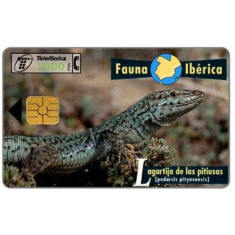 Phonecard for sale: Fauna Iberica, Lagartija de las pitiusas (Podarcis pityusensis), 1000 pta