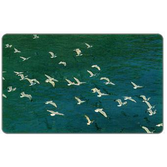 Seagulls / sailboat, 100 units