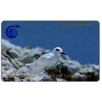 Fairy Tern, 1CASC, £10