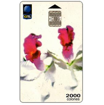 Phonecard for sale: Orchid 1, 2nd edition 03/00, 2000 colones