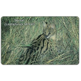Serval cat, N$10