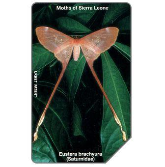 Butterfly, Eustera brachyura, 200 units