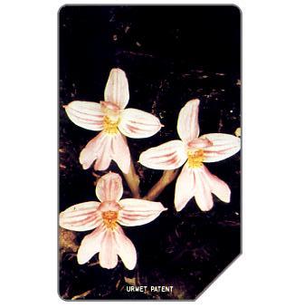 Orchid, 25 units
