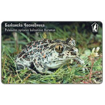 Mobika - Toad Pelobates syriacus balcanicus, 100 units