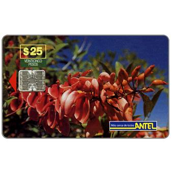 Antel, Red flowers, $25