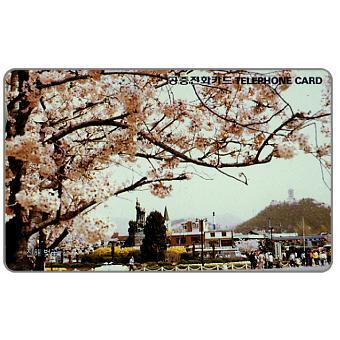 Busan, Cherry blossoms, 2900 won