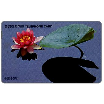 Water lily, 2900 won