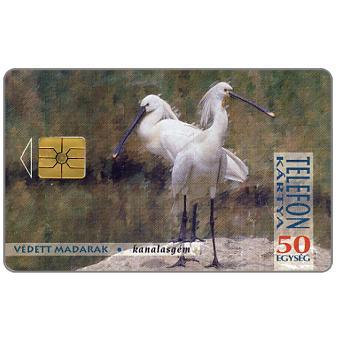Storks, 50 units