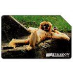 The Phonecard Shop: Italy, Animali per modo di dire, scimmia, 30.06.2000, L.15000