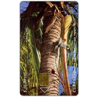 Phonecard for sale: Etecsa, Birds, Woodpeckers, $ 10