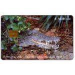 The Phonecard Shop: Etecsa, Crocodile, $ 10
