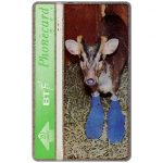 The Phonecard Shop: St.Tiggywinkles, Elvis the Muntjac Deer, 20 units