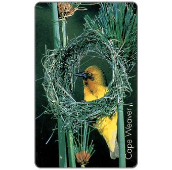Phonecard for sale: MTN - Birds of Africa, Cape Weaver, R15