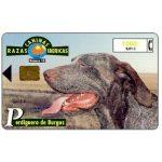 The Phonecard Shop: Spain, Razas Caninas Ibericas, Perdiguero de Burgo, 1000 pta