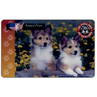 Amerivox - Collie pups, $20