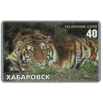 Phonecard for sale: Khabarovsk - Tiger, 40 units
