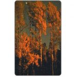 The Phonecard Shop: Romania, Forest, 50000 lei