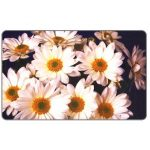 The Phonecard Shop: Daisies, 50000 lei