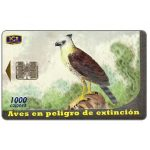The Phonecard Shop: Birds, Aguila Crestada (Morphnus guianensis), 1000 colones