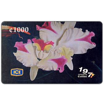 "Phonecard for sale: ""Sin titulo"" (orchid), painting by J.R.del Paso, 1000 colones"