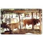 The Phonecard Shop: Ndama Cattle, 125 units