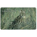 The Phonecard Shop: Serval cat, N$10