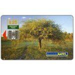 The Phonecard Shop: Uruguay, Antel, Tree, $25