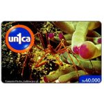 The Phonecard Shop: Un1ca - Callinectes sp., Bs 40000