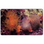 The Phonecard Shop: Marine life, Tubasthea aurea, Bs. 2000