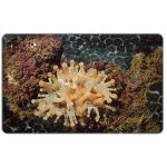 The Phonecard Shop: Marine life, Telmatactis americana, Bs. 2000