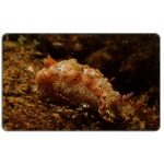 The Phonecard Shop: Marine life, Hypselodoris acriba, Bs. 1000