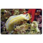Phonecard for sale: Croatia's Undersea World, Chromodorirs krohni, 50 units