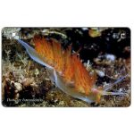 Phonecard for sale: Croatia's Undersea World, Dondice banyulensis, 25 units