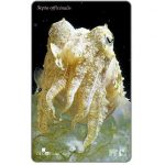 The Phonecard Shop: Croatia's Undersea World, Sepia officinalis, 25 units