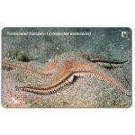 The Phonecard Shop: Croatia, Croatia's Undersea World, Astropecten aranciacus, 50 units