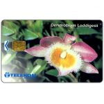 The Phonecard Shop: Malaysia, Telekom - Dendrobium Loddigesii, RM20