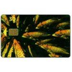 The Phonecard Shop: Denmark, Tele Danmark - Fishes, SN 6500, 31.12.97, 30 kr