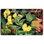 The Phonecard Shop: Yellow flowers, 50 units