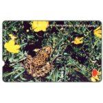 The Phonecard Shop: Turkey, Endangered species, Taurus Frog, 30 units