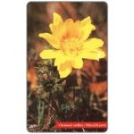 The Phonecard Shop: Slovakia, Yellow flower, 100 units